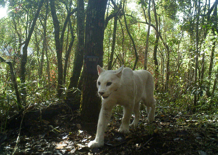 A trap camera captured these photos in the jungles of Brazil