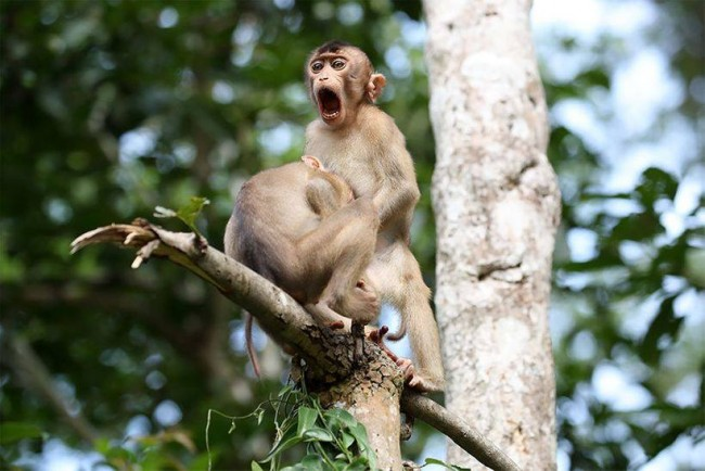 "Highly Commended: ""Monkey Business"" By Megan Lorenz"