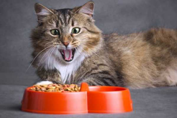 Giving your cat food that they hate