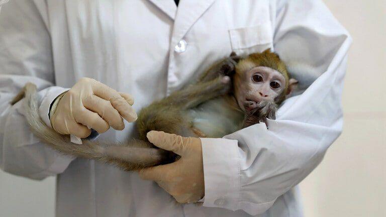 """مصدره القرود .. وباء جديد قادم من الصين """"الفيروس القردي B"""" وتسجيل أول حالة وفاة"""