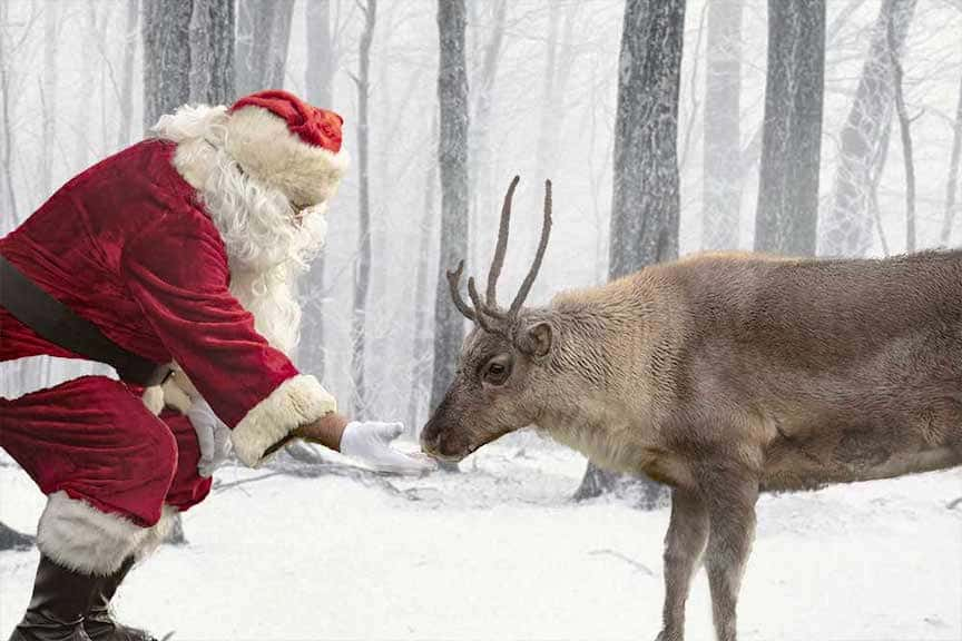 Santa Claus in a snowy scene offering a treat to one of the reindeer