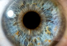 Smartphone Manufacturers Are Ready To Count On The Iris Scanners