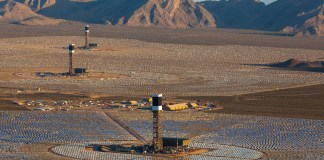 Mojave Desert Solar Plant Responsible for More Than 6,000 Bird Deaths Every Year