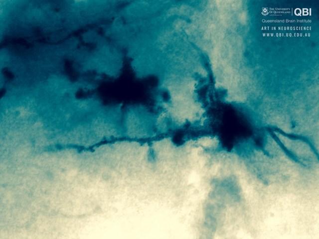 qbi-art-in-neuroscience 1000 × 749