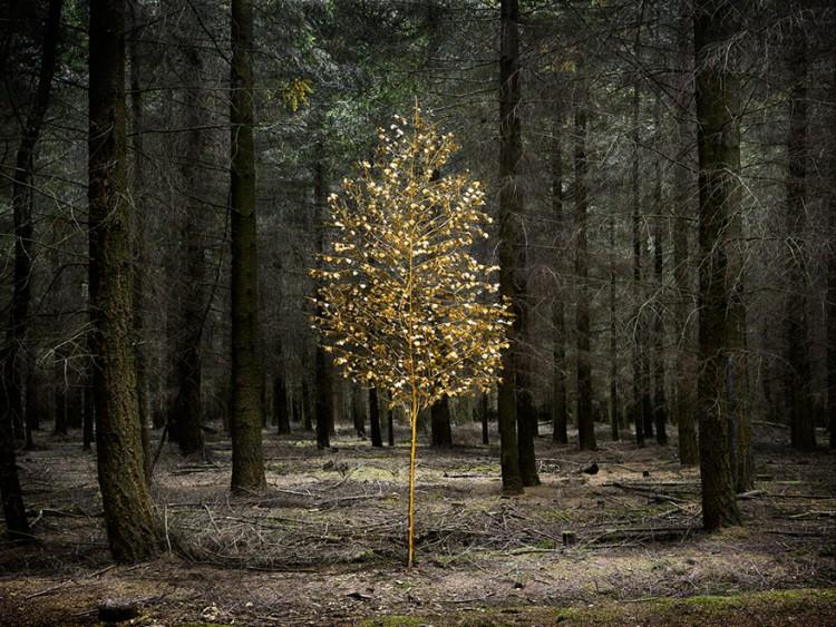 ellie-davies-art-forest-1