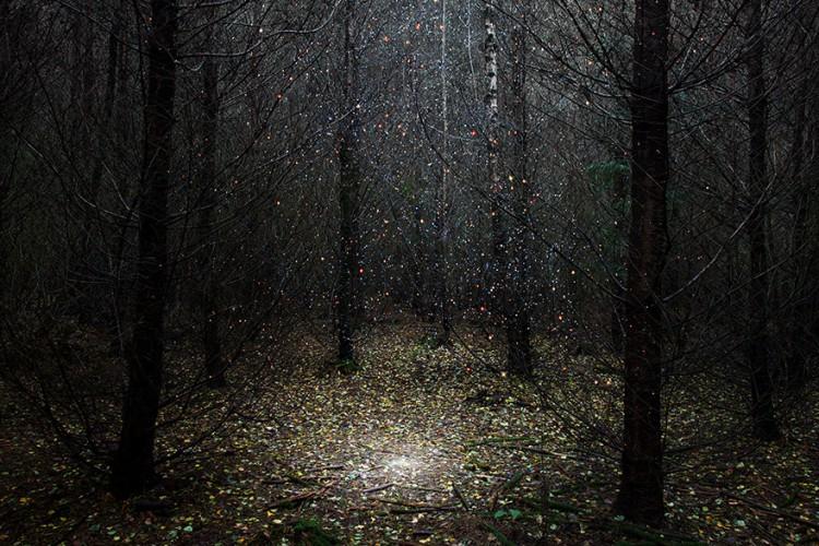 ellie-davies-art-forest-6