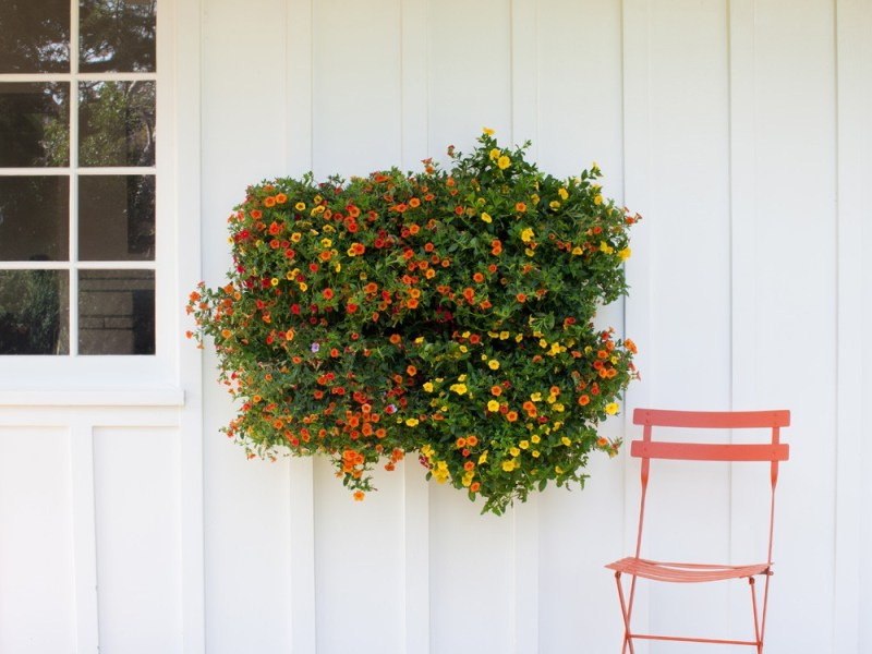Woolly-vertical-wall-planting-4