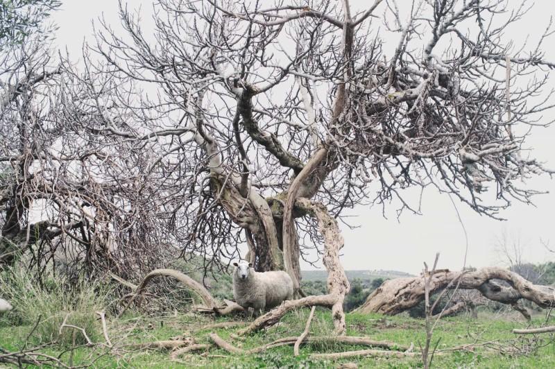 Petros-Koublis-Ephemeral-Landscapes-13