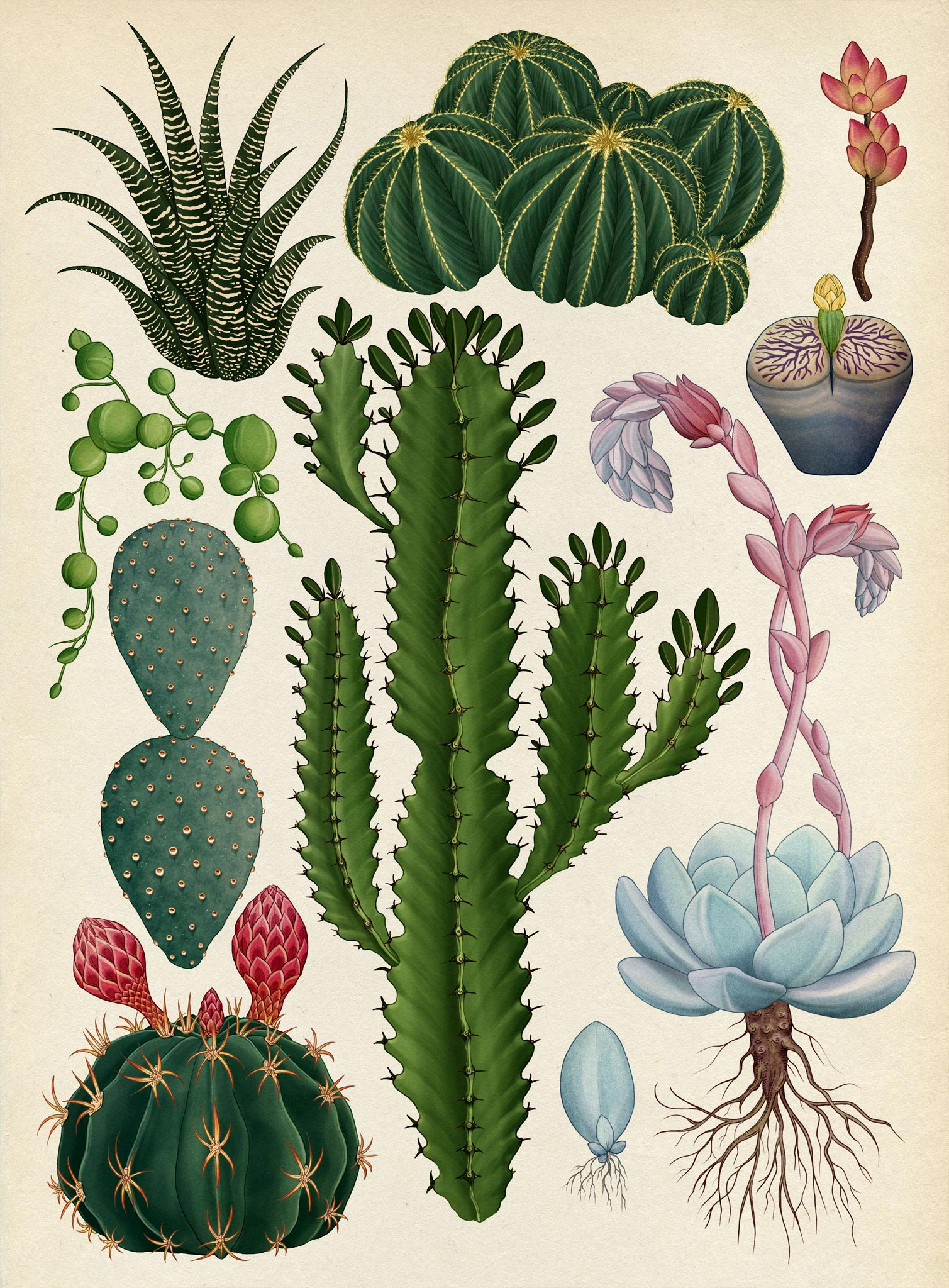 The Botanical Drawings Of Katie Scott 4