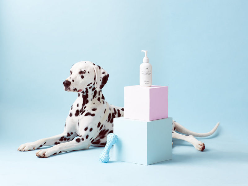 mr-paw-is-a-dog-grooming-brand-with-unique-identity-6