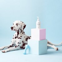Mr.Paw Is A Dog Grooming Brand With Unique Identity