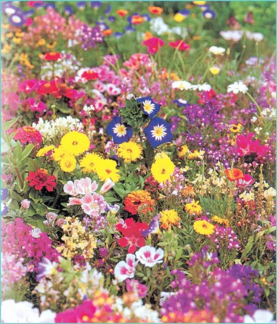 49 Fleur Vivace Pour Bordure  Trendmetr