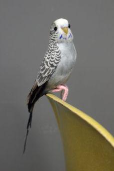 grayson-the-grey-budgie-a-fabulous-artificial-bird-16289-p[ekm]335x502[ekm]