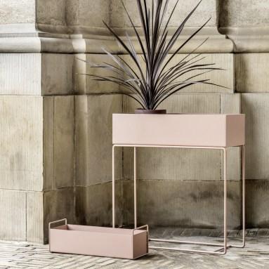 plant-box-rose