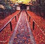 楓の庭を眺めながら、高桐院の紅葉