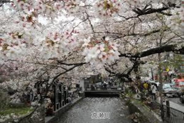 京都 高瀬川 桜まつり