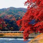 京都の紅葉、定番の自然美散策は嵐山界隈で