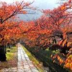 京都で人気の散歩名所 哲学の道で紅葉狩り