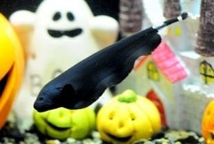 京都水族館 Happy Halloween!