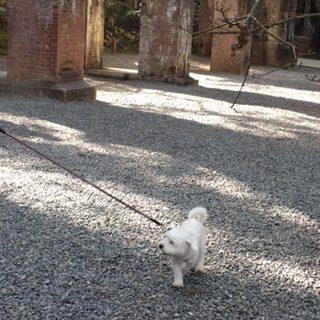 京都の初詣 犬も一緒に拝観できる南禅寺