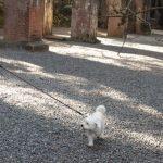 ペット連れで拝観できる南禅寺