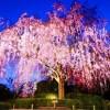 妙心寺退蔵院 春の特別公開