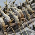 京都 初夏の穴場行事 嵐山若鮎祭