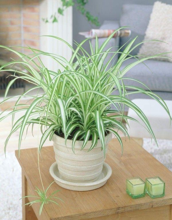 Zimmerpflanzen die mit wenig Licht gut auskommen