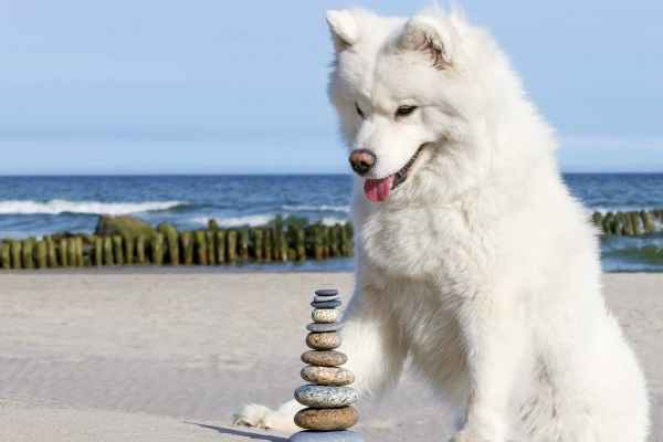 how to stop dog from eating rocks