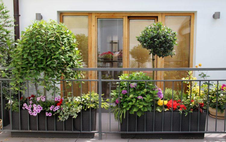 How To Master Urban Balcony Gardening Trendspot Inc
