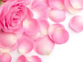 rose petals for dark spots on lips