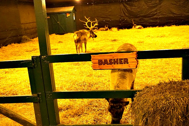 reindeer - dasher stable