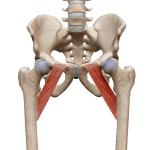 Гребенчатая мышца