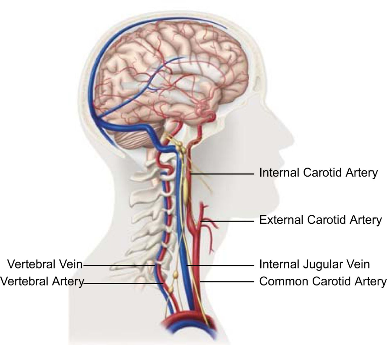 hight resolution of cervical hinging and migraines