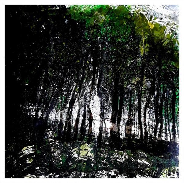 Coastal Forest (Saundersfoot), Ian Pearsall