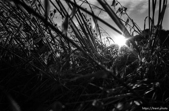 thistles and weeds, Las Trampas.