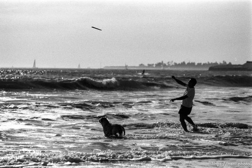 Guy throwing stick into the waves for his dog to fetch.