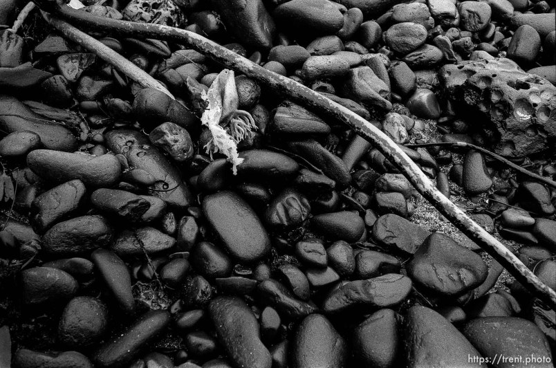 black rocks, driftwood, and seaweed at beach.