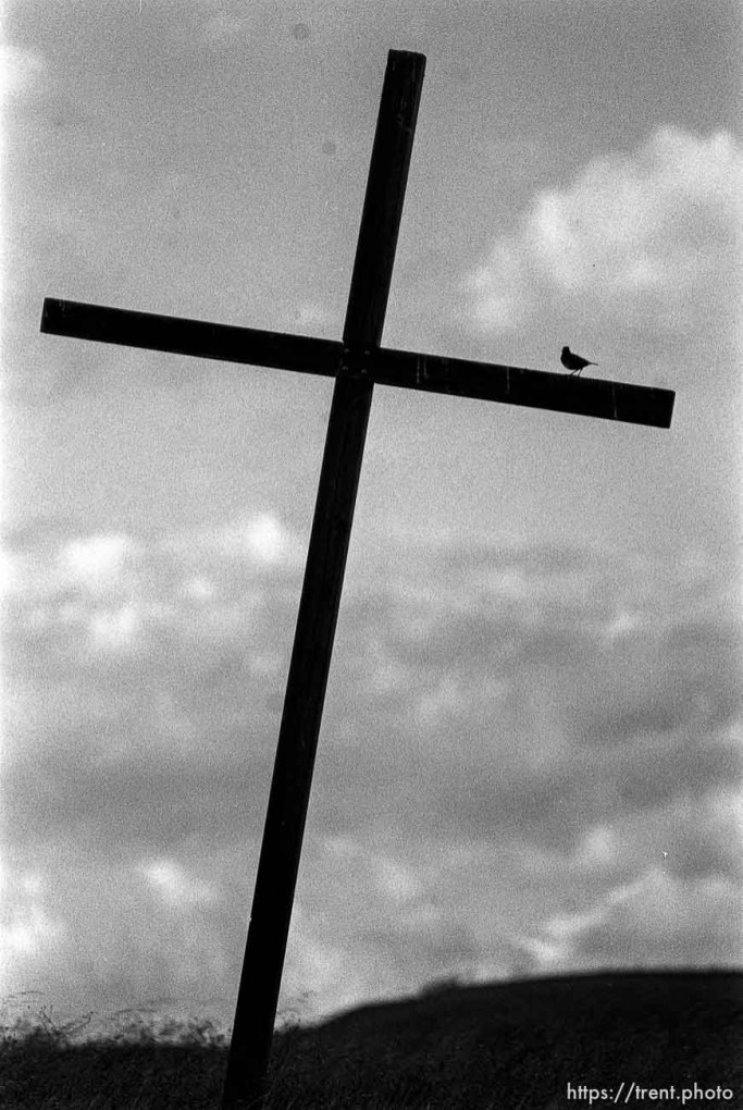 bird sitting on cross near Las Trampas.
