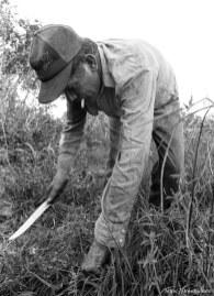 Casey cutting plants.
