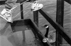 Boy's feet and goose at the Lafayette Reservoir