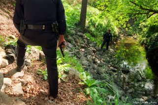 Police search creek for car theft suspect.
