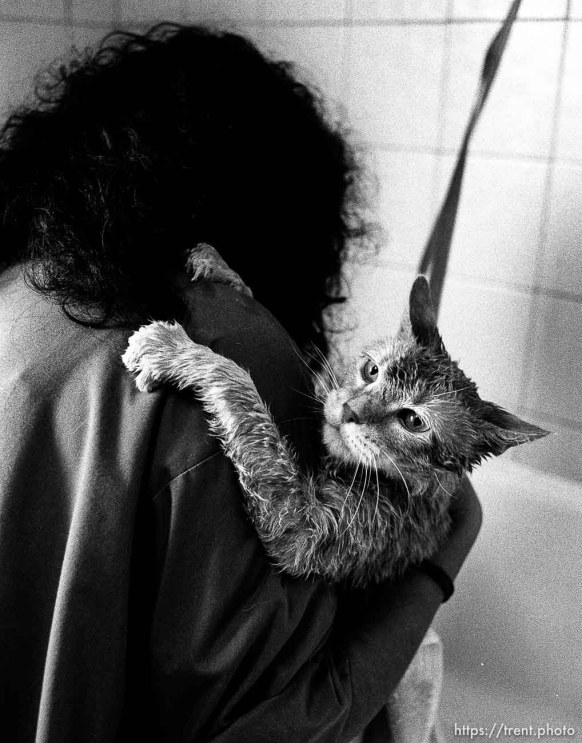 Cat gets washed at the Lafayette Animal Hospital