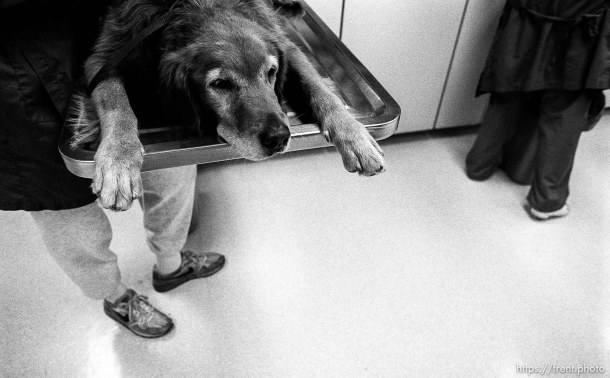 Dog getting checked out at Lafayette Animal Hospital
