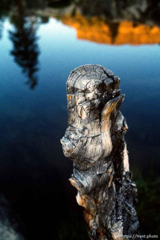 Log and reflection at Sword Lake