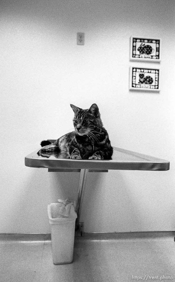Cat on examining table at Lafayette Animal Hospital