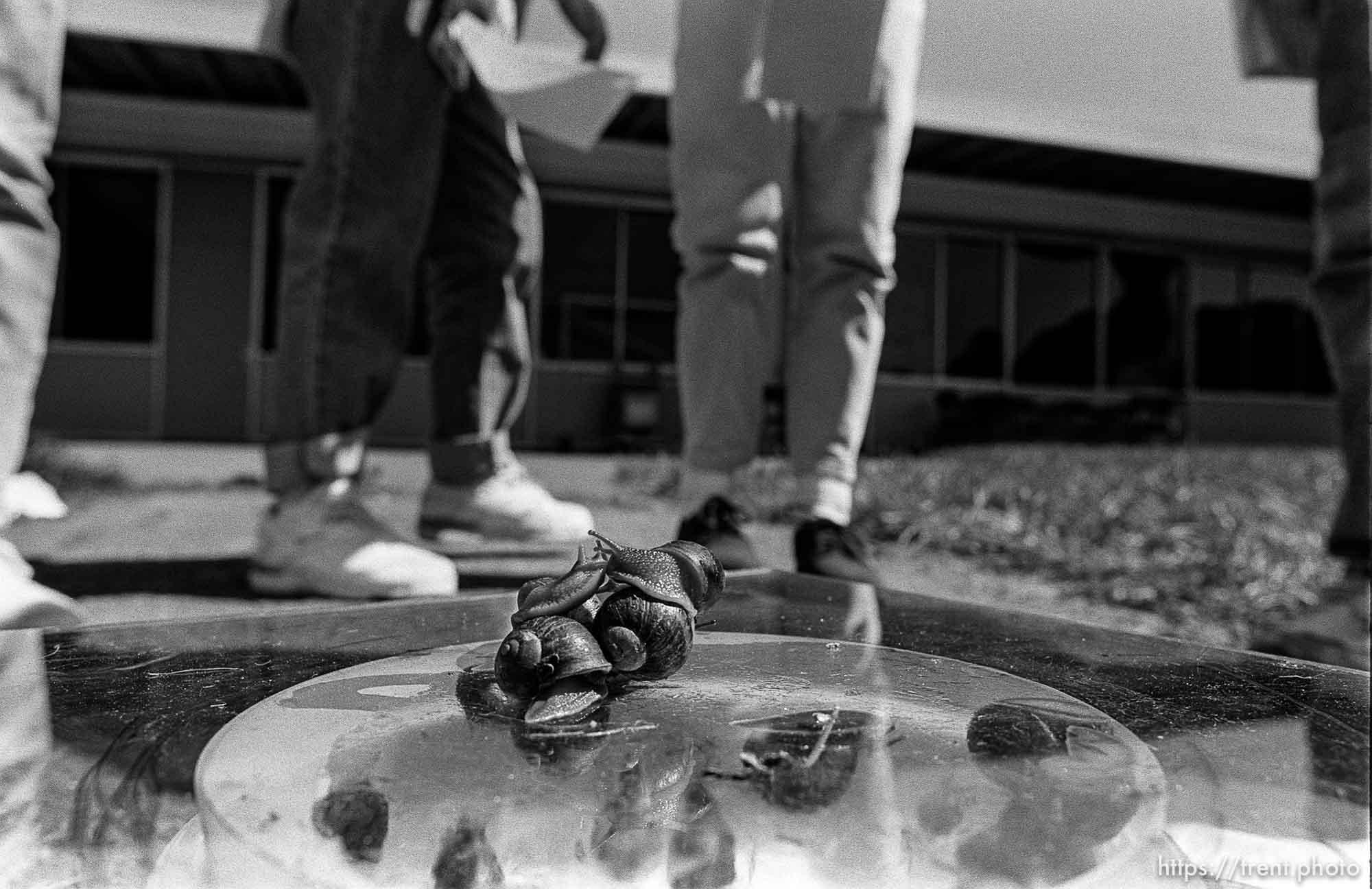 Snail race gone awry