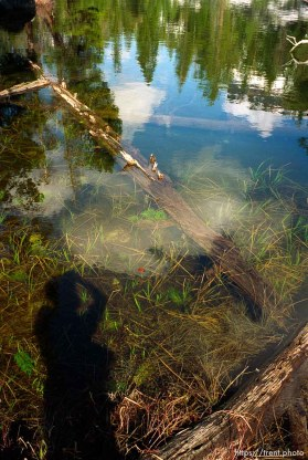 Trent shadow and pond and trees on solo hike to Sword Lake