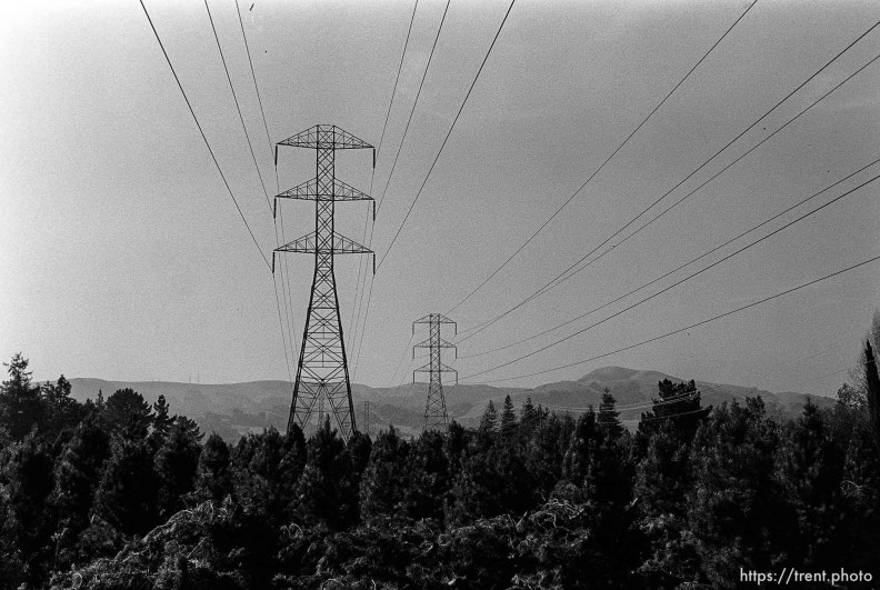 Power lines over christmas tree farm. San Ramon project