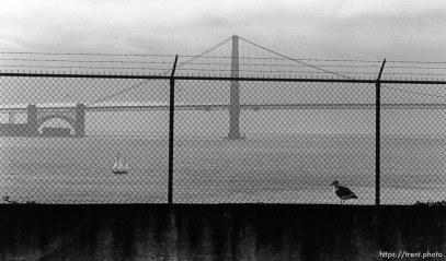 Seagull, sailboat, Golden Gate Bridge, fence on Alcatraz
